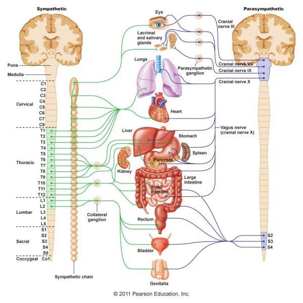 thoracic spine massage breath reduce stress