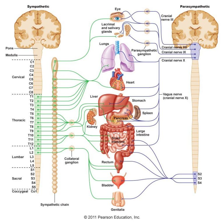How the Breath Factor reduces stress (it's all in your spine…)